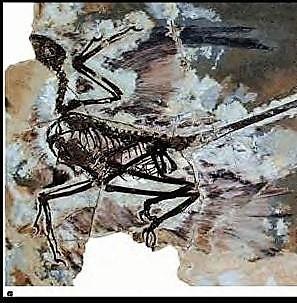microraptor13